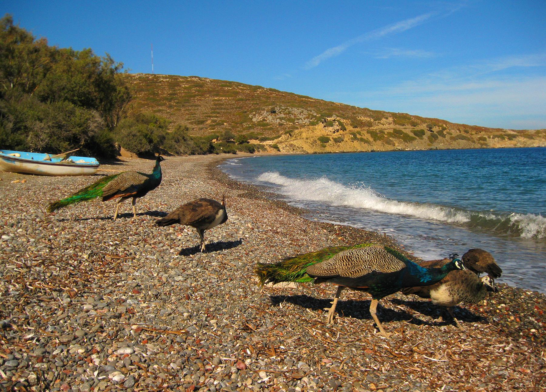 Plaka beach Tilos